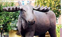 kartongbolaget-moose-first.jpg